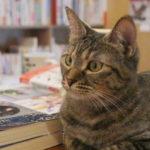 店員が「猫」の本屋さん!  夢を形にするため、走り抜けたオーナーの1年間