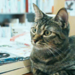 店員が「猫」の本屋さん!